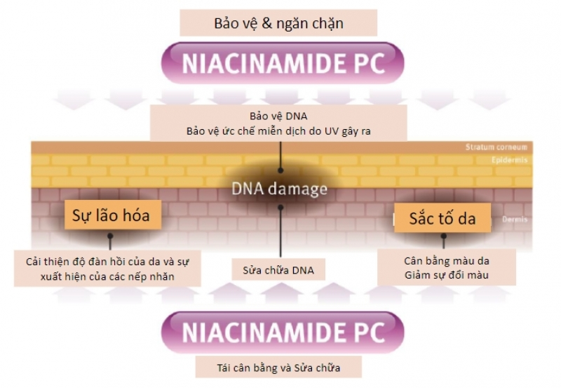 REJUVE INTERACTIVE NIACIN SHADE COMPLEX